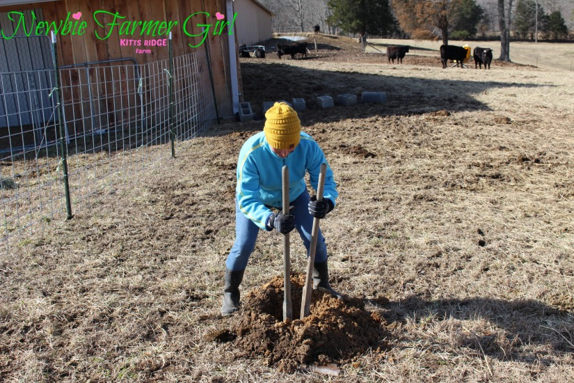 Kimberly using a hole digger
