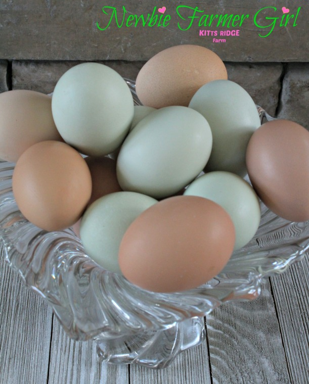 Blue and Brown Eggs.jpg