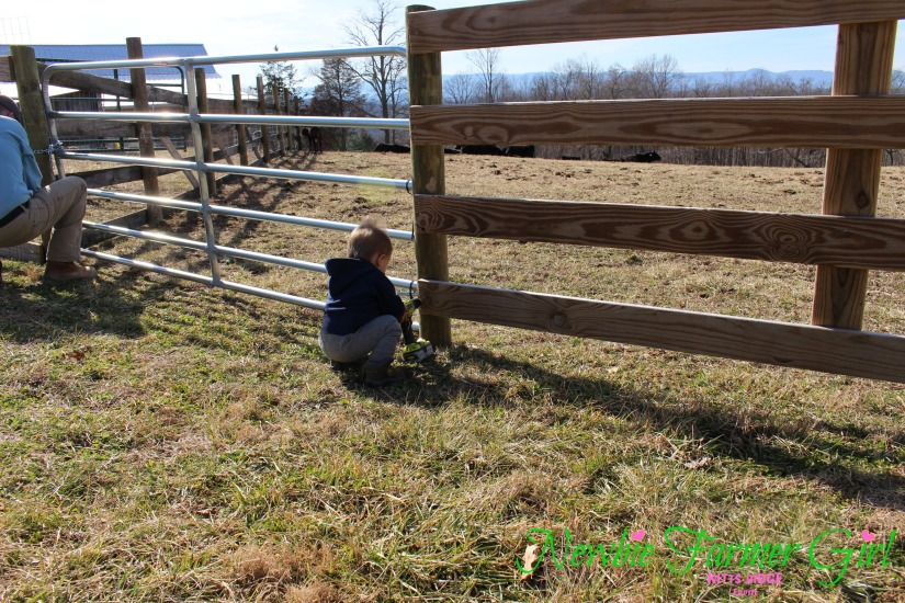 Kye helping daddy with fence