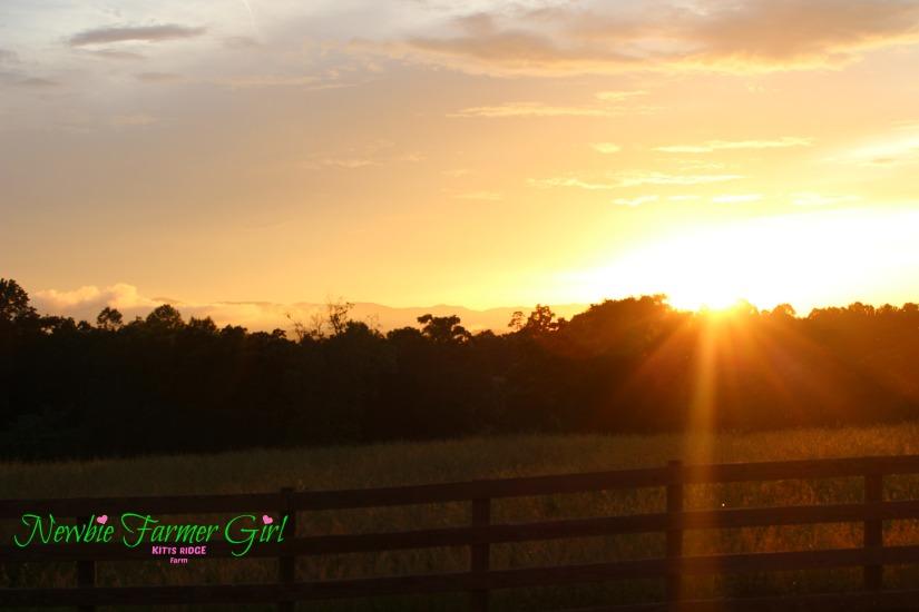 Evening Sunset Sky.jpg