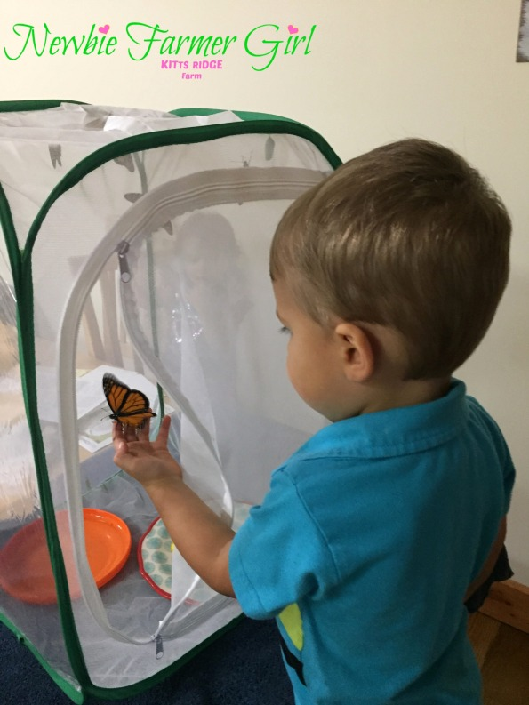 baby boy holding butterfly